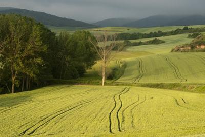 A Beautiful Landscape Near Ciruena with Sierra De La Demanda Mountains in the Background by Tino Soriano