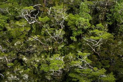 Trees by Tino Soriano