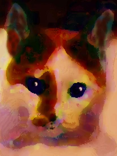 Tinsy Cat-Kenny Primmer-Art Print