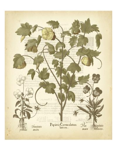 Tinted Besler Botanical IV-Besler Basilius-Art Print