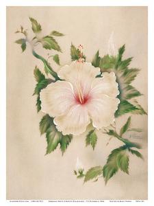 Hawaiian White Hibiscus (Pua Aloalo) by Tip Freeman