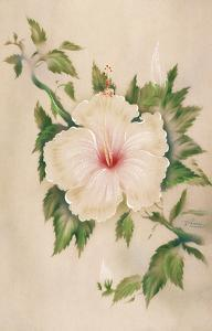 Hawaiian White Hibiscus (Pua Aloalo) by Tip Freeman