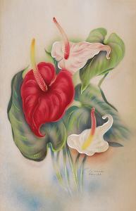 Red and White Anthuriums Hawaii by Tip Freeman