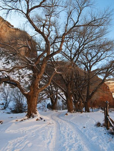 Tire Tracks in Snow Leading Up to Canyon De Chelly Cliffs-James Forte-Photographic Print