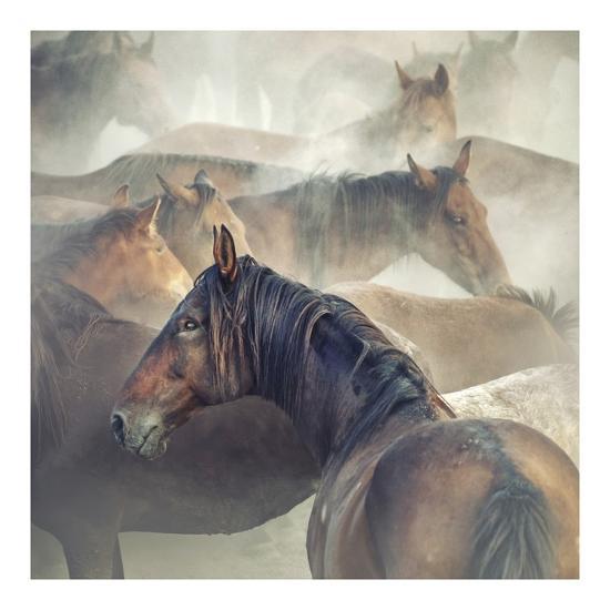 Tired Horses-Huseyin Ta?k?n-Giclee Print