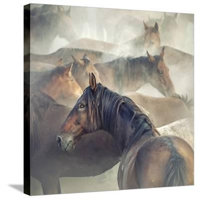 Tired Horses-Huseyin Ta?k?n-Stretched Canvas Print