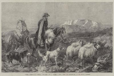 Tired Sheep, Glen Spean, Scotland, from the Exhibition of the Royal Academy-Richard Ansdell-Giclee Print