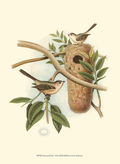 Titmouse & Nest--Art Print