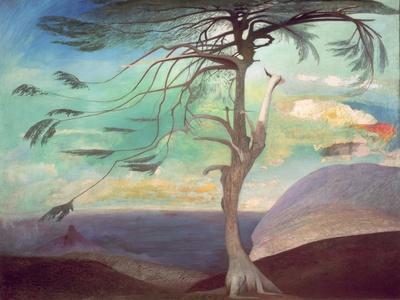 The Solitary Cedar, 1907