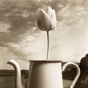 Tulip Teapot by TM Photography