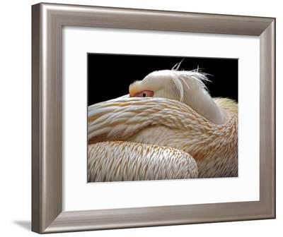 To Be Half Asleep...-Thierry Dufour-Framed Photographic Print