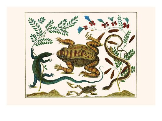 Toad, Lizard, Serpentes, Leopard Frog, Capers-Albertus Seba-Art Print