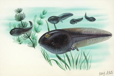 Toad Tadpoles--Giclee Print
