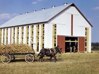 Tobacco Farmer Drives His Crop to a Barn on a Mule-Drawn Cart-Volkmar K^ Wentzel-Photographic Print
