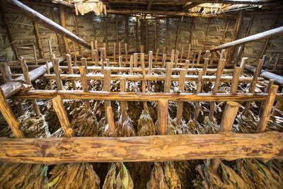 https://imgc.artprintimages.com/img/print/tobacco-hanging-in-a-shed-to-dry-in-the-best-known-growing-region-of-cuba-pinar-del-rio_u-l-pu6h070.jpg?p=0