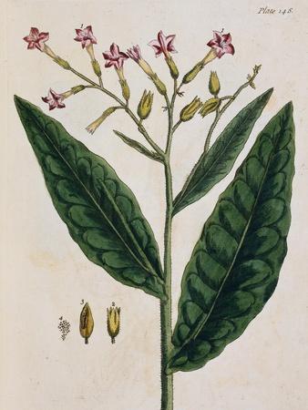 https://imgc.artprintimages.com/img/print/tobacco-plant_u-l-pf5bko0.jpg?p=0