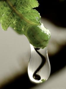 Koru, Fern Sprout Reflection in Raindrop, New Zealand by Tobias Bernhard