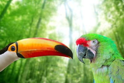 Toco Toucan And Military Macaw Green Parrot-holbox-Photographic Print