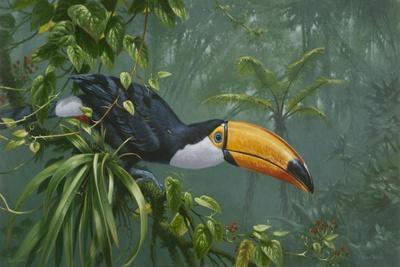 https://imgc.artprintimages.com/img/print/toco-toucan_u-l-q12uws80.jpg?p=0