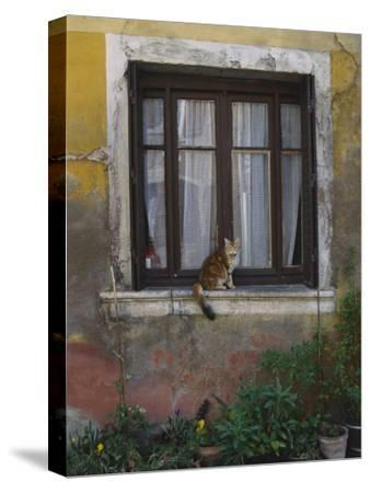 A Cat Sitting on an Exterior Window Sill in Tournus