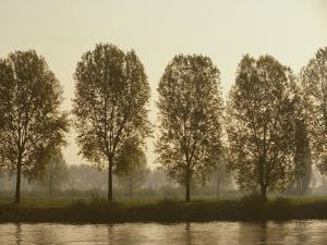 A Row of Poplar Trees Along the Banks of the Rhine River by Todd Gipstein