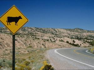 A Stretch of Road in New Mexico with a Yellow Cattle Crossing Sign by Todd Gipstein