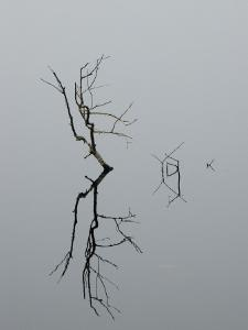 Abstract View of a Branch and its Reflection on Still Water by Todd Gipstein