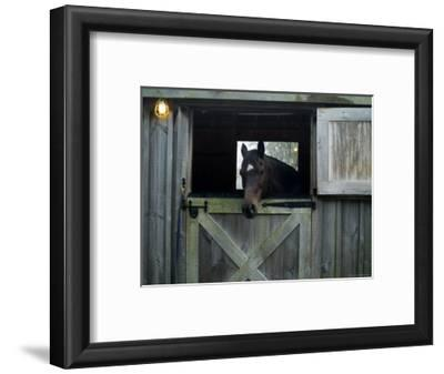 Brown Horse in a Barn, Block Island, Rhode Island