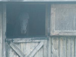 Brown Horse in a Barn in the Fog, Block Island, Rhode Island by Todd Gipstein