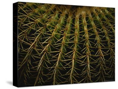 Close View of Cactus Needles