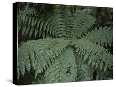Detail of Fern in Rain Forest