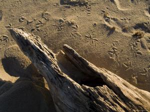 Driftwood on the Beach with Bird Footprints in the Sand, Block Island, Rhode Island by Todd Gipstein