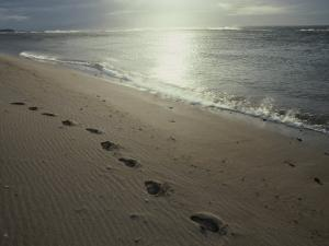 Footprints in the Sand on a Beach by Todd Gipstein