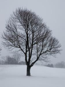 Lone Tree on a Golf Course Covered with Snow by Todd Gipstein