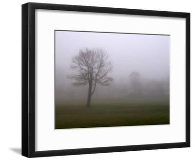 Lone Tree on a Golf Course in the Fog