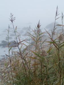 Looking Through Sea Grass to a Rocky Beach in the Fog, Block Island, Rhode Island by Todd Gipstein