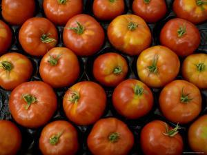 Native Tomatoes at an Outdoor Market in New York City by Todd Gipstein