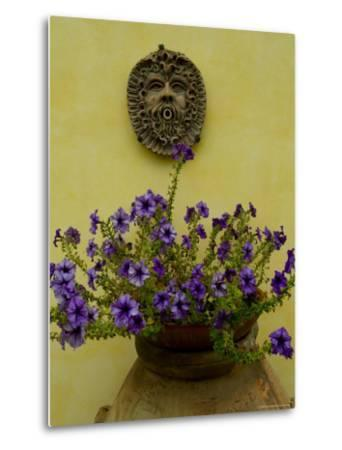 Potted Purple Petunias on a Wooden Bench against a Yellow Wall, Tuscany, Italy