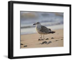 Seagull on the Beach by Todd Gipstein