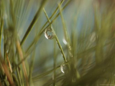 Water Droplets Clinging To Blades of Grass