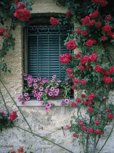 Window on Stucco Wall Surrounded by Red Roses with Petunia Flower Box by Todd Gipstein