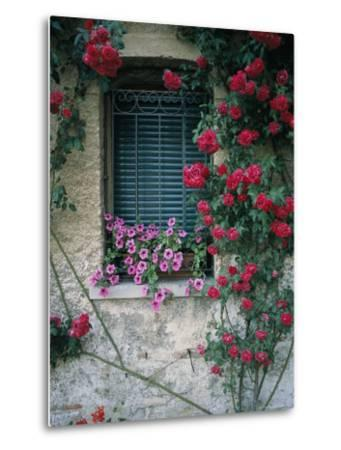 Window on Stucco Wall Surrounded by Red Roses with Petunia Flower Box