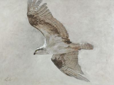 Searching Osprey