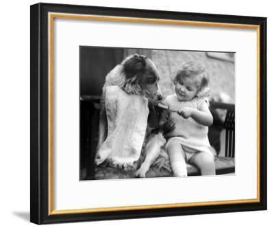 Toddler Trying to Brush Dog's Teeth--Framed Premium Photographic Print