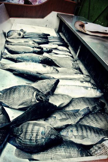 Tokyo Fish Market--Photo