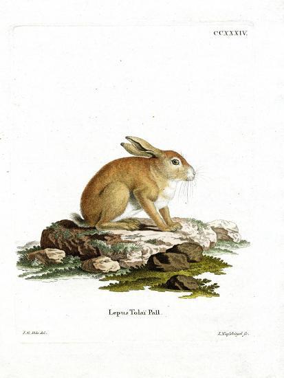 Tolai Hare--Giclee Print
