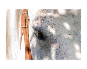 Horse's Eye by Tom Artin