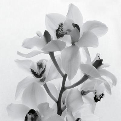 Orchid Spray I by Tom Artin