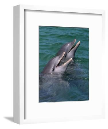 Bottlenose Dolphins Calling from the Water