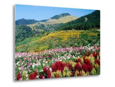 Cultivated and Naturally-Forested Hillsides
